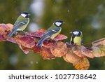 three songbird. garden bird... | Shutterstock . vector #1027738642