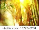 bamboo. bamboos forest. growing ... | Shutterstock . vector #1027743208