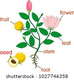 parts of plant. morphology of... | Shutterstock .eps vector #1027746358