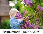 cute little blonde hair boy... | Shutterstock . vector #1027777075