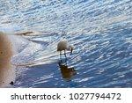 a beautiful graceful white...   Shutterstock . vector #1027794472