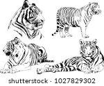 vector drawings sketches... | Shutterstock .eps vector #1027829302