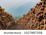 Rows Of Piled Of Logs   Waitin...