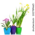 beautiful spring flowers in...   Shutterstock . vector #102789665