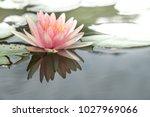 lotus  fragrant white water... | Shutterstock . vector #1027969066