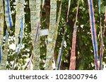 money baht thai baht   Shutterstock . vector #1028007946