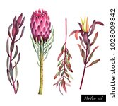Set Of Colorful Protea Flowers...