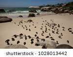 cape town  western cape  south... | Shutterstock . vector #1028013442