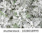leaf background image | Shutterstock . vector #1028018995