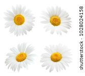 Daisy Flower Isolated On White...
