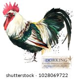 dorking rooster. poultry... | Shutterstock . vector #1028069722