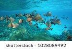 shoal of fish humpback red... | Shutterstock . vector #1028089492