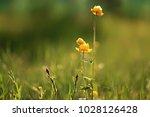 background nature yellow...   Shutterstock . vector #1028126428