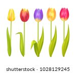 colorful tulips set isolated on ... | Shutterstock .eps vector #1028129245