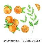 watercolor set  oranges   Shutterstock . vector #1028179165
