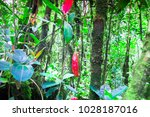 nepenthes pitcher flower ... | Shutterstock . vector #1028187016
