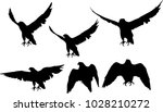 illustration with six hawk... | Shutterstock .eps vector #1028210272