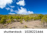west of gran canaria  february... | Shutterstock . vector #1028221666
