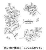 hand drawn set with cranberries.... | Shutterstock .eps vector #1028229952