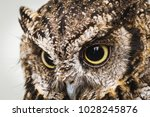 Photo of an owl in macro...