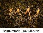 chinese herbal medicine | Shutterstock . vector #1028386345