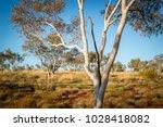 australia  red center. bush and ...   Shutterstock . vector #1028418082