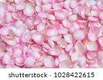 Stock photo beautiful pink rose flower petals nature background 1028422615