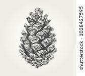 hand drawn pine cone. vintage... | Shutterstock .eps vector #1028427595