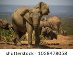 an elephant shaking the mud of... | Shutterstock . vector #1028478058