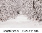 beautiful winter forest with a...   Shutterstock . vector #1028544586