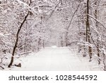 beautiful winter forest with a...   Shutterstock . vector #1028544592