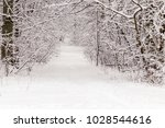 beautiful winter forest with a...   Shutterstock . vector #1028544616