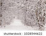 beautiful winter forest with a...   Shutterstock . vector #1028544622