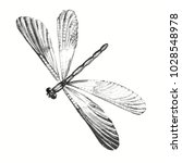 Dragonfly Engraving. Pencil...