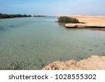 mangrove plant in ras mohammed...   Shutterstock . vector #1028555302