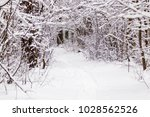 beautiful winter forest with a...   Shutterstock . vector #1028562526