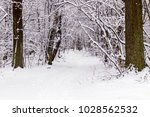 beautiful winter forest with a...   Shutterstock . vector #1028562532