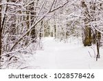 beautiful winter forest with a...   Shutterstock . vector #1028578426