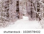beautiful winter forest with a...   Shutterstock . vector #1028578432