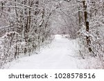 beautiful winter forest with a...   Shutterstock . vector #1028578516