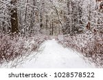 beautiful winter forest with a...   Shutterstock . vector #1028578522