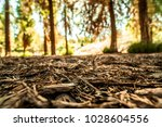Redwood Forest Floor With...