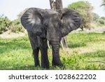african elephants in tarangire...   Shutterstock . vector #1028622202