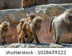 paignton  uk   june 17  2010 ... | Shutterstock . vector #1028659222