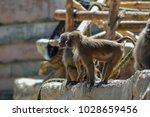 paignton  uk   june 17  2010 ... | Shutterstock . vector #1028659456