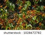 monarch butterfly biosphere... | Shutterstock . vector #1028672782