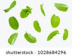 fly fresh raw mint leaves... | Shutterstock . vector #1028684296