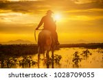 silhouette cowboy on... | Shutterstock . vector #1028709055