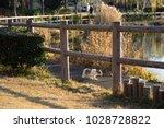 stray cats in kadoike park   Shutterstock . vector #1028728822