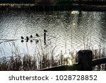 winter's kadoike park   Shutterstock . vector #1028728852